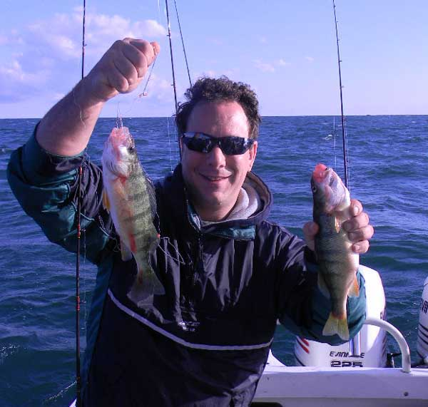 jumbo perch double